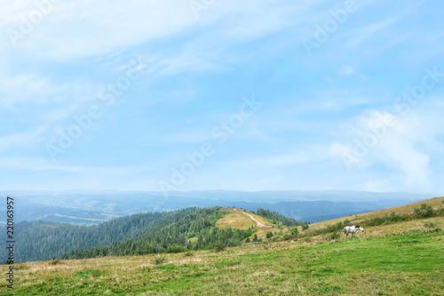 Foto op Aluminium Blauwe hemel Picturesque landscape with mountain forest