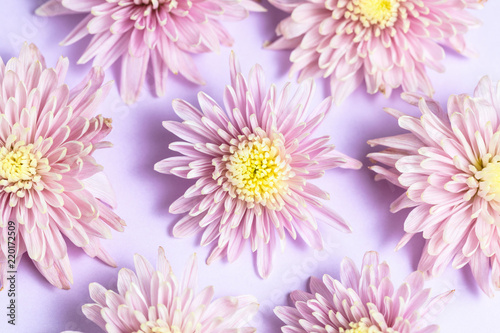Foto op Canvas Bloemen Pink lilac chrysanthemums arrangement on pink lilac background. Flat lay, top view. Floral background.