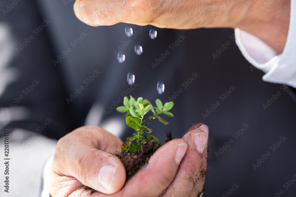 Fototapeta Person Watering To Sapling