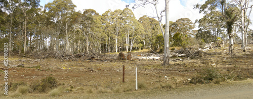 row of chopped down, cleared and bulldozed tree's on a rural