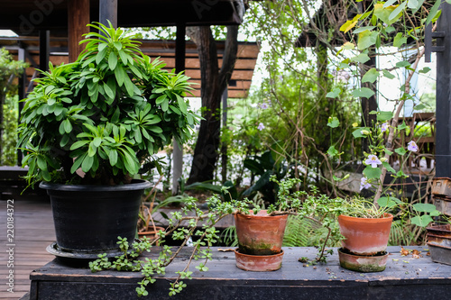 Admirable Assorted Potted Plant In Black And Brown Clay Pots On Black Caraccident5 Cool Chair Designs And Ideas Caraccident5Info