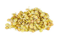 Sprouted Green Lentils Seeds
