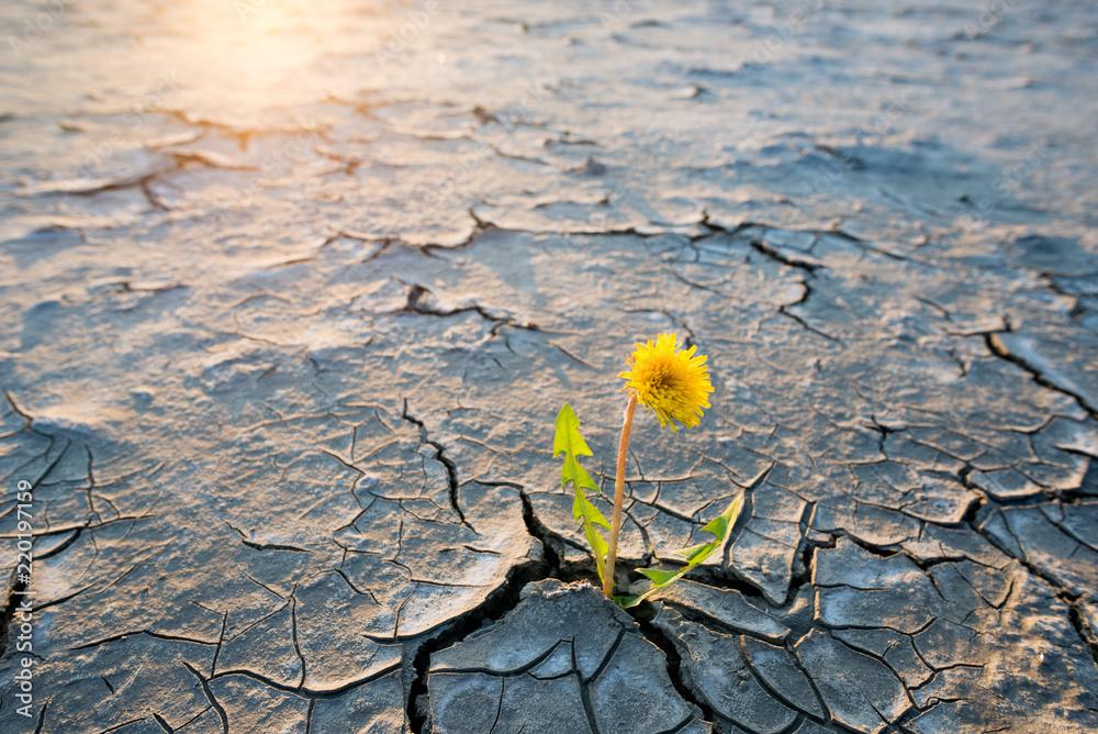 Fototapeta plant growing in desert drought concept