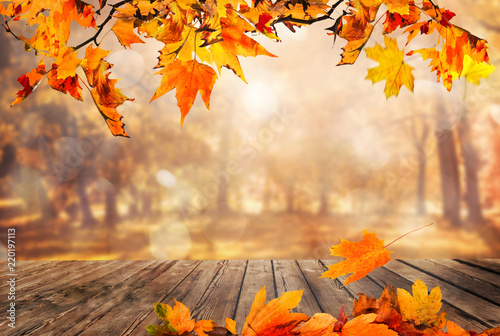 wooden table with orange leaves autumn background adobe stock で