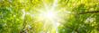 Leinwanddruck Bild - Laubwald im Frühling mit Sonnenstrahlen