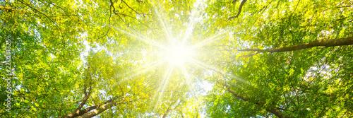 Foto auf Gartenposter Gelb Laubwald im Frühling mit Sonnenstrahlen