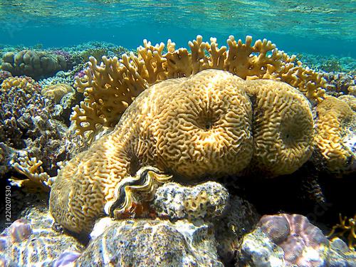 Fotobehang Koraalriffen Reef coral underwater in Ras Mohammed, Egypt, Red Sea