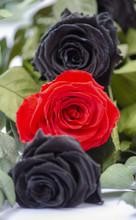 Dos Rosas Negras Y Una Rosa Roja