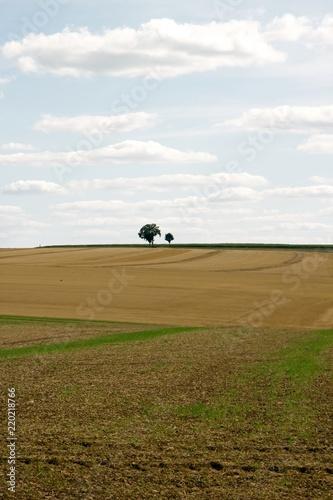 Fotografie, Obraz  Arbres solitaires dans la campagne française (Yonne Bourgogne France)