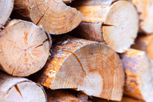 Macro View Of Wooden Tree Trunks