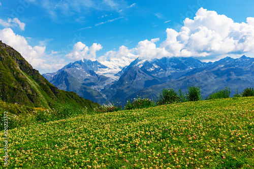 Tuinposter Alpen Mountain flower meadow in Alps, Switzerland