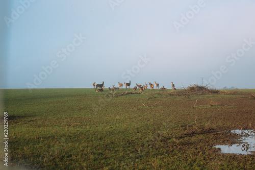 Photo  Denmark Winter Landscape