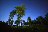 Nocne rozgwieżdżone niebo las Polska kaszuby