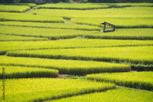 Deurstickers Rijstvelden Green Terraced Rice Field in Nan, Thailand.