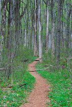 A Dirt Trail In Early Spring A...