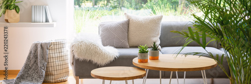 Fototapeta Panorama of plants on wooden table in front of grey sofa in scandi living room interior. Real photo obraz