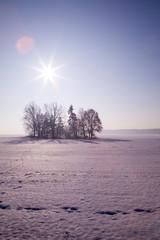Polska zima mróz krajobraz drzewa słońce