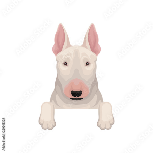 Foto Bull terrier peeking out from border, muzzle and paws