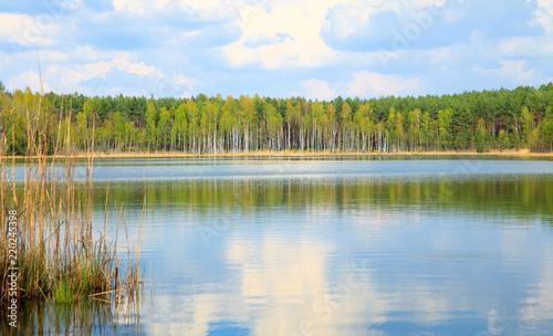 Jezioro brzozy kaszuby wiosna - 220245398