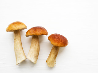 Autumn fresh boletus mushrooms. Forest cepes on a white surface of a table, close up.