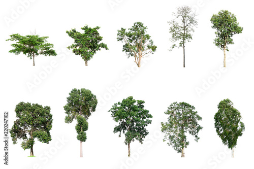The collection many tree species included on white background. Fototapete
