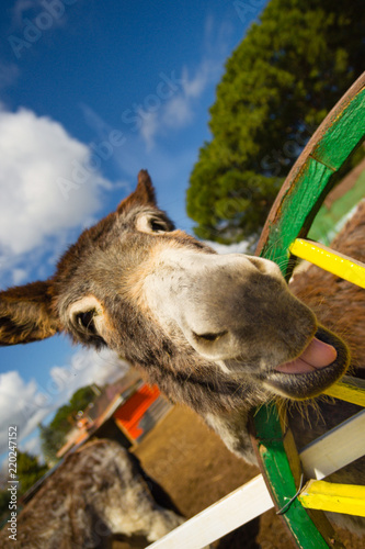 Deurstickers Ezel Funny donkey saying whats up to me