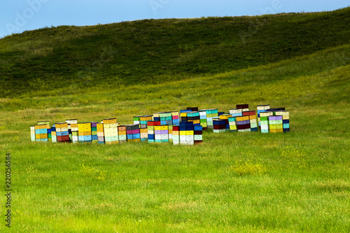 Fotografie, Obraz  Colorful Beehives of the rolling hill of South Dakota, near Custer State Park, S