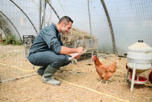 Portrait Of Handsome Young Farmer Veterinarian Taking Care Of Poultry In A Small Chicken Farm