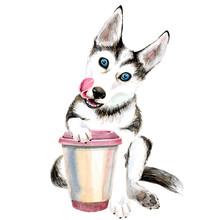 The Husky Dog Drinks Coffee Fr...