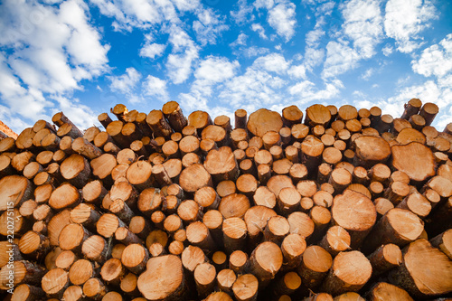 Obraz Stacked wood logs - lumber or timber industry concept - fototapety do salonu