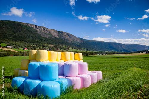 Cuadros en Lienzo Colorful silage bales on a field in Norway