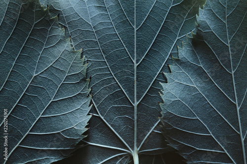 Tuinposter Macrofotografie Macro image of blue leaves, natural background