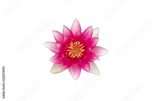 Deurstickers Waterlelies Seerose in Pink isoliert auf weiß