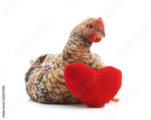 Keuken foto achterwand Kip Chicken with a toy heart.