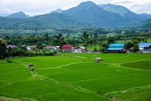Beautiful Rice Field At Wat Ph...