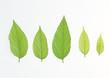leaf isolate bacground