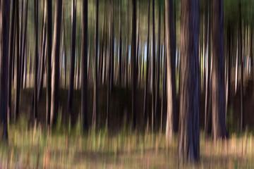 Trees Camera Movement ICM