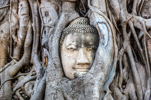 Ayutthaya Head of Buddha statue Canvas Print