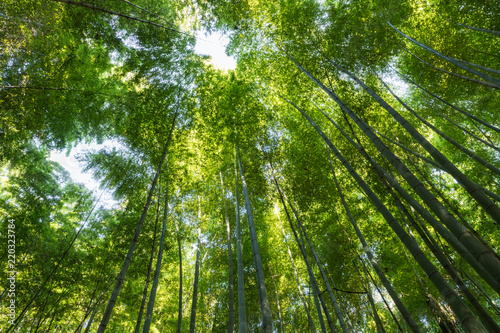 Foto op Plexiglas Bamboe upward view of the bamboo forest