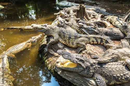 Crocodiles in Zoo in Bangkok