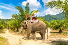 Tourists Riding Elephant In Th...