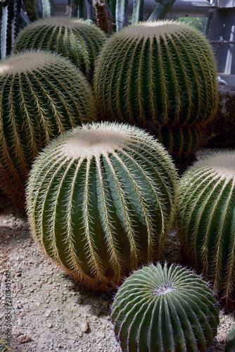 Tuinposter Cactus サボテン