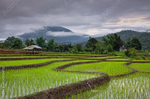 Poster Rijstvelden Terraced rice field in Muang Kong,Chiang Mai,Thailand
