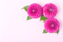 Dahlia Ball-barbarry Flowers W...