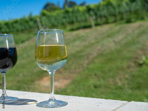 Fotografie, Obraz  A glass of white wine sitting on outdoor wall in front of winery plantation