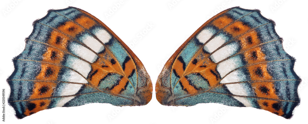 cyan and orange butterfly wings on white