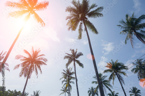 Garden Poster Retro palm trees on a beautiful clouds