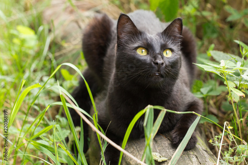 Foto Beautiful black cat outdoors in nature in green grass
