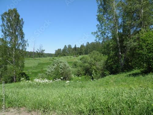 Fotobehang Olijf siberia summer forest