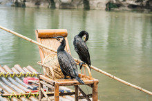 Cormorants In China